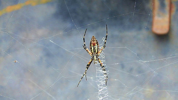 Writing Spider by Cathy Harper
