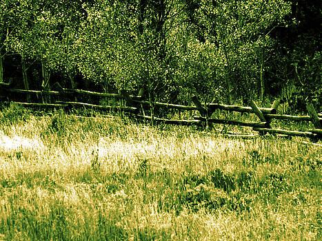 Colette Merrill - Wy scenery