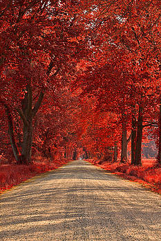 Wye Island Ruby Road by Nicolas Raymond