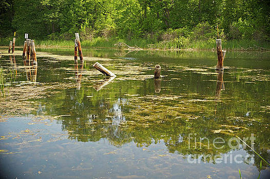 Wye River Reflections by Elaine Mikkelstrup