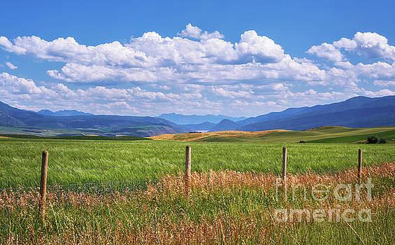 Wyoming Landscape by Sharon Seaward
