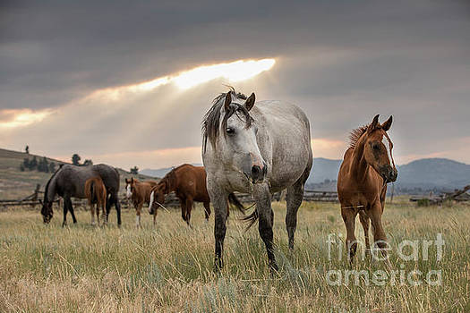 Wyoming Sky by Terri Cage