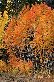 Wyoming Splendor by Jim Fillpot