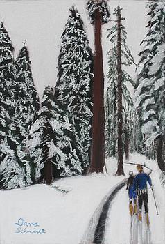 X-C Skiing in the CA Redwoods 14 years ago by Dana Schmidt