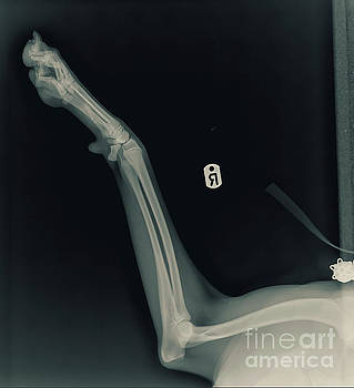 X-ray of a dog's front right leg by Yael Rosen