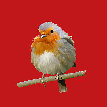 Bamalam  Photography - Xmas Robin - Red Background