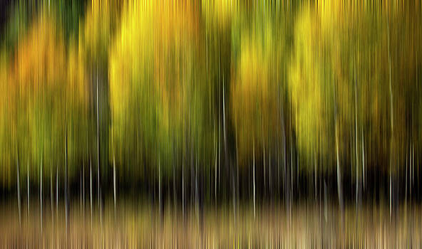 Color of Aspen by Janel Seymour