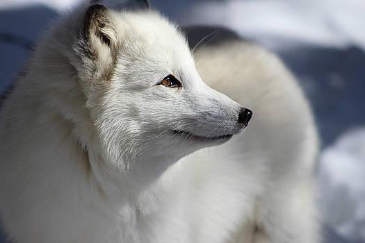 Yana the Fox by Azthet Photography