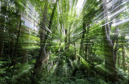 Yanbaru forest by Shawn  Miller
