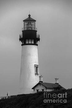 Yaquina Head  by Moore Northwest Images