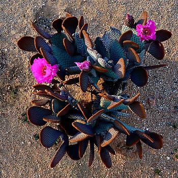 Yard Cactus by Lee Scott