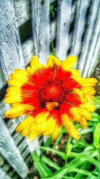 Yard Color by Dustin Soph