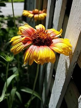 Yard flower in town by Dustin Soph