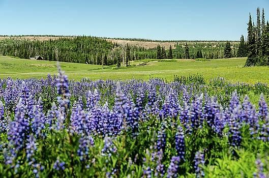 Yard full of wildflowers by Gaelyn Olmsted
