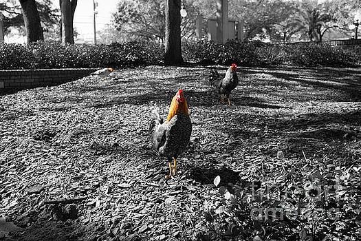Ybor Cocks by Blake Yeager