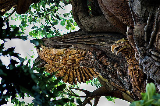 Yearning Eagle by Luis Rosario