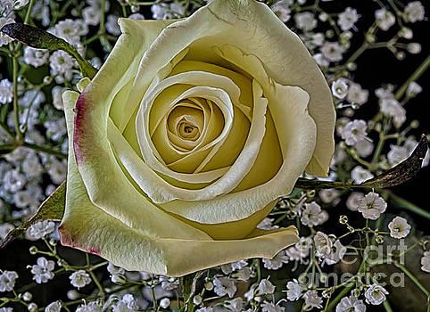 Yeller Rose by Dee Johnson