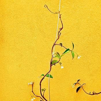 Yellow #1 by Julie Gebhardt