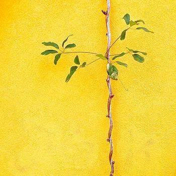 Yellow #2 by Julie Gebhardt