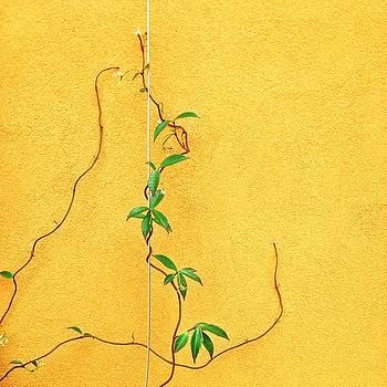Yellow #3 by Julie Gebhardt