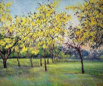 Yellow by Abid Khan