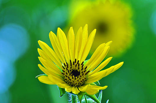 Yellow and Green by Peter  McIntosh
