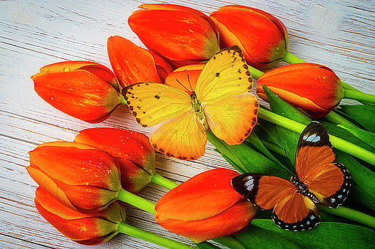 Yellow And Orange Butterflies On Tulips by Garry Gay