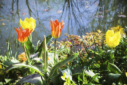 Yellow and Orange Tulips in Giverny  by David Smith