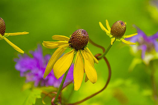 Yellow and purple by David Tennis