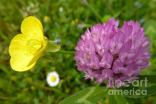 Yellow and Purple Flowers by Jean Bernard Roussilhe