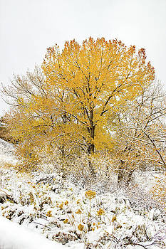 Jon Burch Photography - Yellow and White