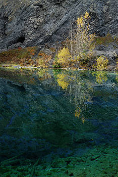 Reimar Gaertner - Yellow Aspen leaves reflected in the Indigo blue waters of Grass