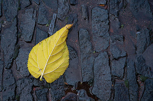 Yellow Autumn leaf  by Michalakis Ppalis