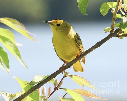 Yellow Beauty by Anita Oakley