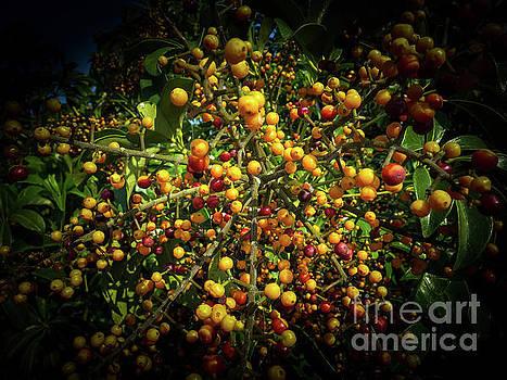 Yellow beauty by Barbara Dudzinska