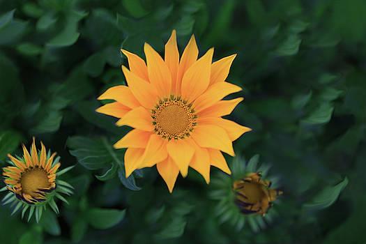 Yellow Beauty by Kay Kochenderfer