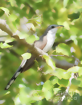 Yellow-billed Cuckoo by Anita Oakley