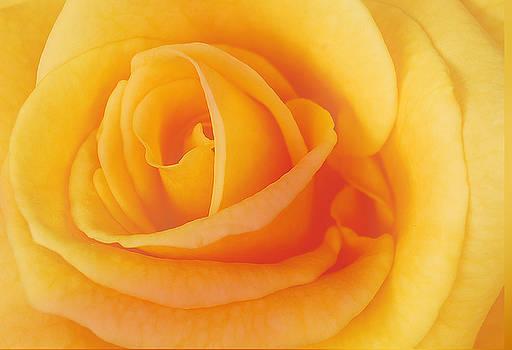 Michael Peychich - Yellow Blend