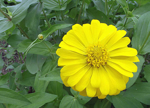 Yellow Bloom by Russell Pittock