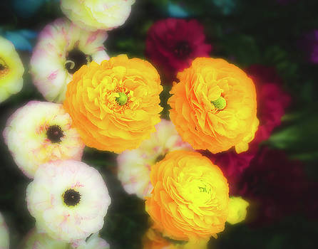 Yellow Blooms by Sonja Quintero