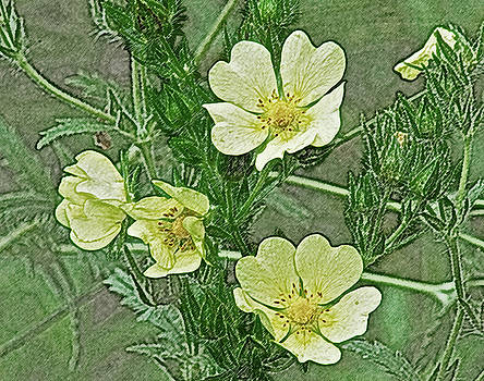 Michael Peychich - Yellow Blossoms