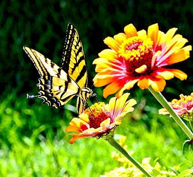 Yellow Butterfly on Flower by Amy McDaniel