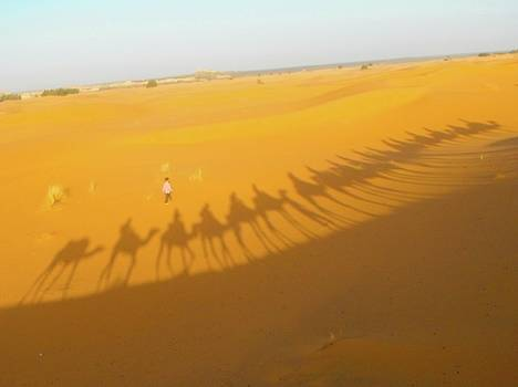 Yellow Camel Shadows by Exploramum Exploramum