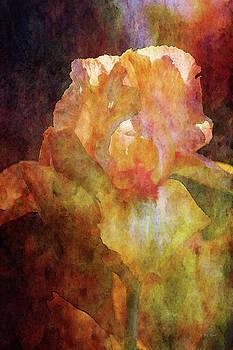 Yellow Chiffon and Peach Iris 6729 IDP_2 by Steven Ward