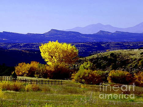 Yellow Cotton Wood red Vale Colorado by Annie Gibbons