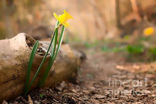 Yellow Daffodil And Log by Mary  Smyth
