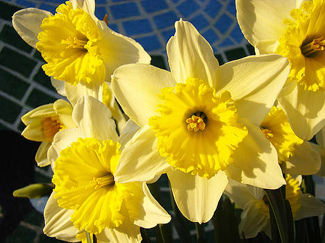 Baslee Troutman - Yellow Daffodil Flowers Garden Floral art prints Baslee Troutman