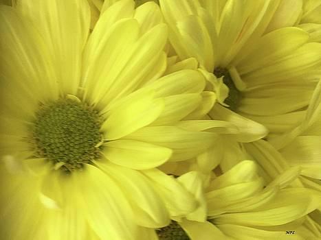 Yellow Daisies by Marian Palucci-Lonzetta