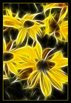 Ricky Barnard - Yellow Daisies