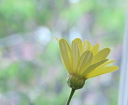 Yellow Daisy by Lynn Harrison